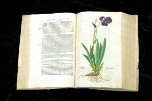 hs-iris-large