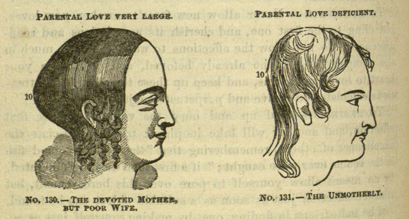 Image result for phrenology