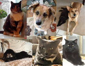 Meet the Pets!