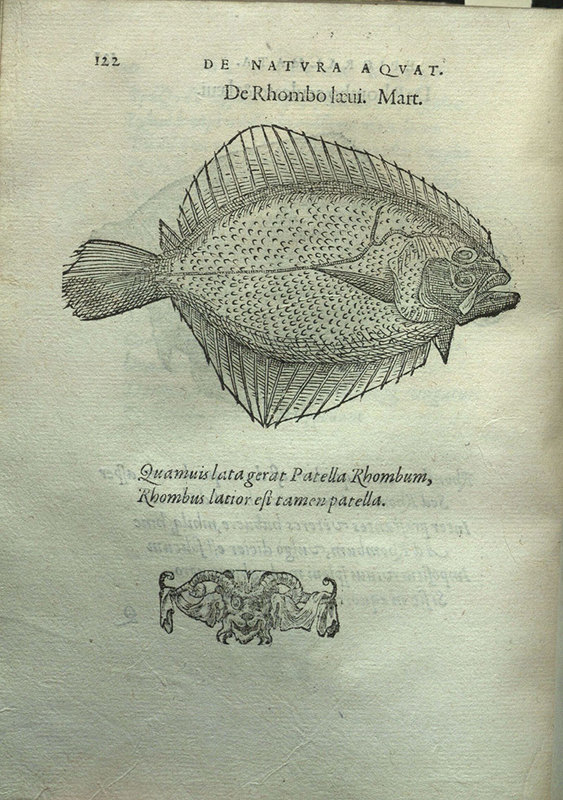 De natura aquatilium carmen&lt;br /&gt;<br />