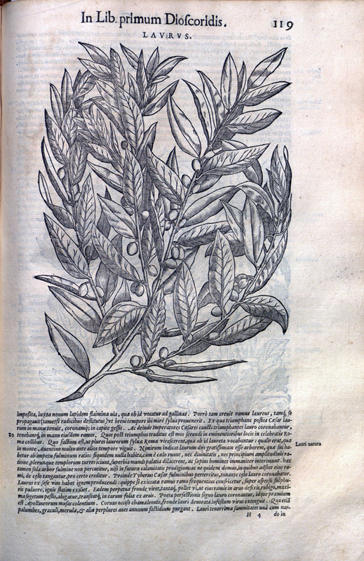 Commentarii, in sex libros Pedacii Dioscoridis Anazarbei, De medica materia