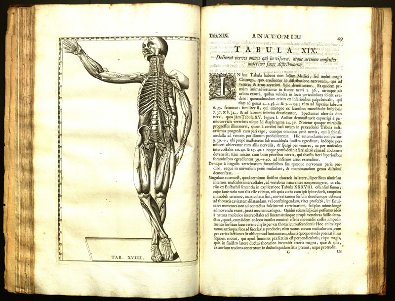 Tabulae anatomicae clarissimi viri Bartholomaei Eustachii / quas ... Praefatione notisque illustravit ... Jo. Maria Lancisius.