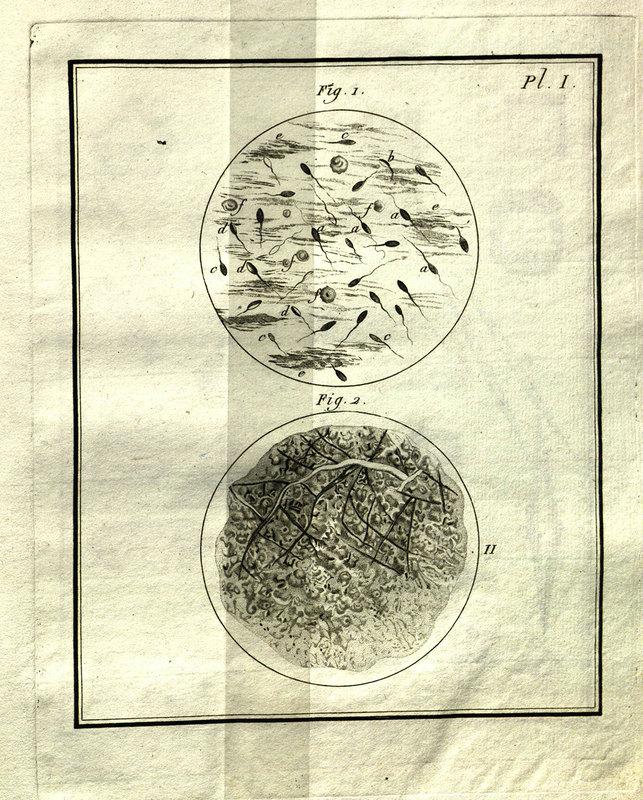 Dissertation sur la génération, les animalcules spermatiques, et ceux d'infusions : avec des observations microscopiques sur le sperme et sur différentes infusions / par le Baron de Gleichen ; ouvrage traduit de l'allemand, orné de trente-quatre planches, dont plusieurs enluminées.