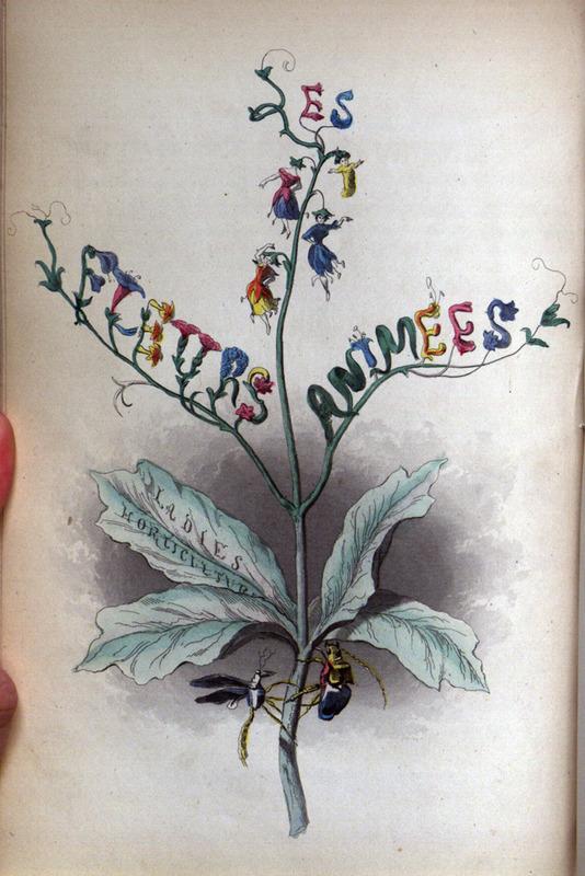 Flowers-Personified-11.jpg
