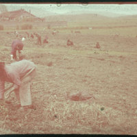 Hiller 09-080: Farmers working in a field in Nanking 2