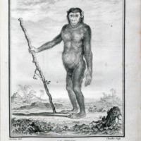 Histoire naturelle, générale et particulière, avec la description du Cabinet de roi.<br />