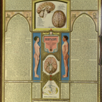Bodyscope / [by Ralph H. Segal ; Theo. I. Segal, associate editor ; anatomical illustrations by Wm. Brown McNett].
