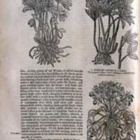 Theatrum botanicum: the theater of plants, or An Herball of large extent: containing therein a more ample and exact history and declaration of the physicall herbs and plants ... distributed into sundry classes or tribes, for the more easie knowledge of the many herbes of one nature and property ... collected ... by John Parkinson Apothecary of London, and the Kings herbarist.