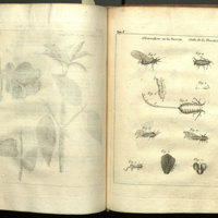 Œuvres d'histoire naturelle et de philosophie / de Charles Bonnet.<br />