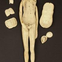 [Anatomical mannikin].