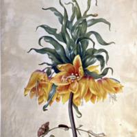 Leningrad watercolours / Maria Sibylla Merian ; [edited by Ernst Ullmann].