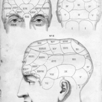 Outlines of phrenology, or of the philosophy of man