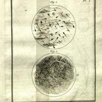 Epigenetics-Rare-Folio-QL-966-.G5514.jpg
