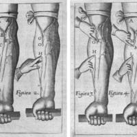 Guiliemi Harveji ... Exercitationes anatomicæ, de motu cordis & sanguinis circulatione : cum duplici indice capitum & rerum : accessit Dissertatio de corde Doct. Jacobi de Back.