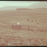 Hiller 09-079: Farmers working in a field in Nanking 1