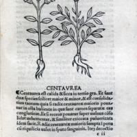 Herbarius.