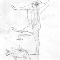The works of the late Professor Camper : on the connexion between the science of anatomy and the arts of drawing, painting, statuary ... Illustrated with seventeen plates ...