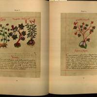 Libellus de medicialibus Indorum herbis. English