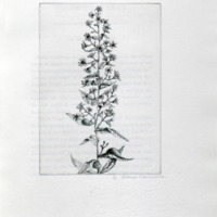 An herbarium for the fair : being a book of common herbs with etchings by Betty Shaw-Lawrence : together with curious notes on their histories and uses for furtherance of loveliness and love / by Thomas Fassam.