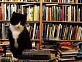479270001_68343e8678_m.books